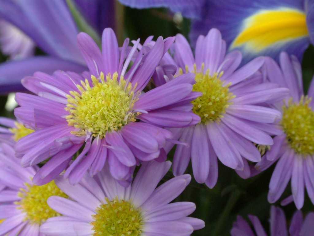 Sfondi fiori gratis per desktop